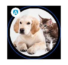 alergeny zwierząt domowych